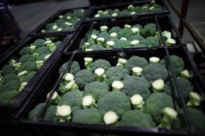 brokolo brokoli