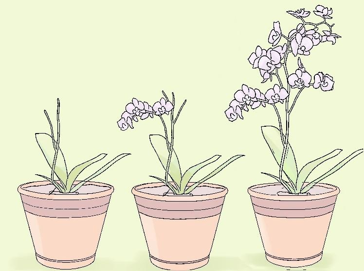 mini-orkide-bakimi-nasil-yapilir-adim13