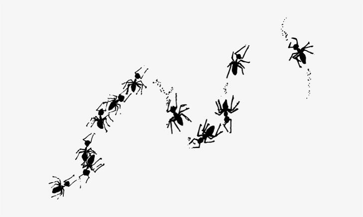 Mutfaktaki Karıncalardan Nasıl Kurtulabilirim Adım 1